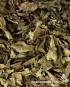 Psychotria viridis (Chacruna leaf)