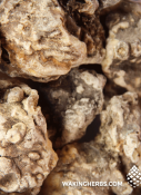 Dacryodes_peruviana_Copal_resin_close_up