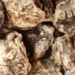 Dacryodes_peruviana_Copal_resin_close_up