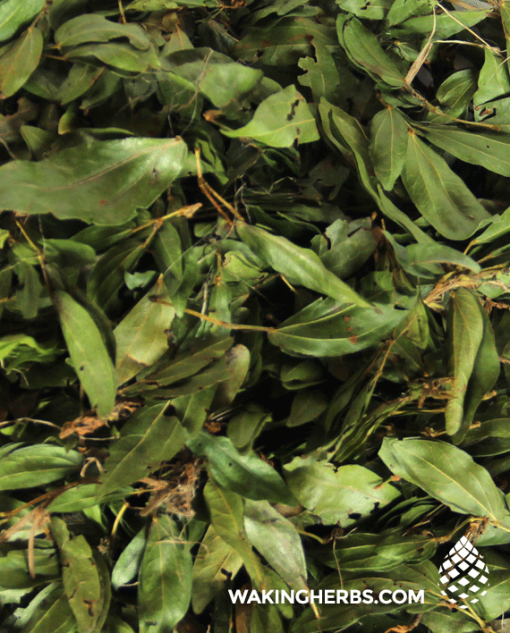 Calliandra angustifolia Bobinsana leaf