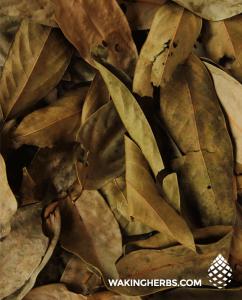 Ishpingo leaf pile close up