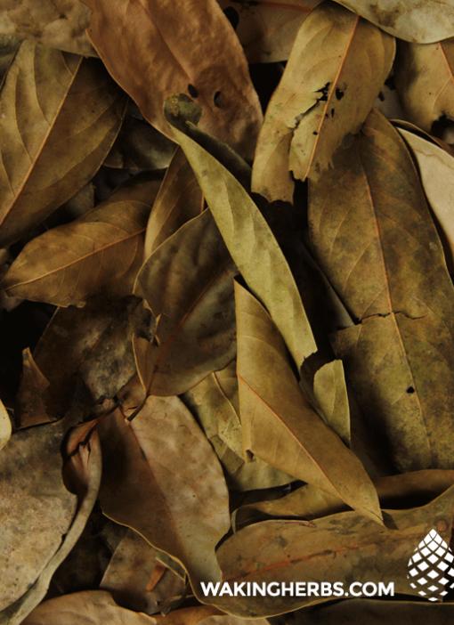Ishpingo_leaf_close_up