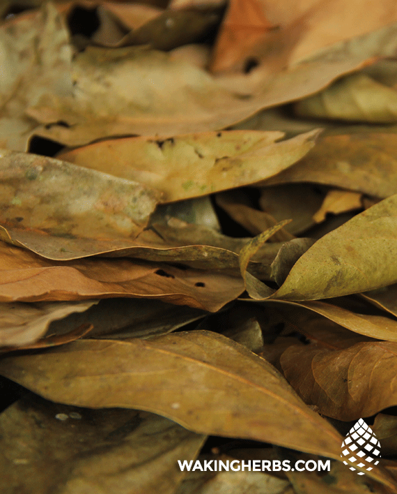 Ishpingo_leaf_close_up_02