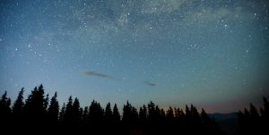 Stary Sky with trees