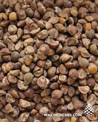 Argyreia nervosa (Hawaiian baby woodrose seeds