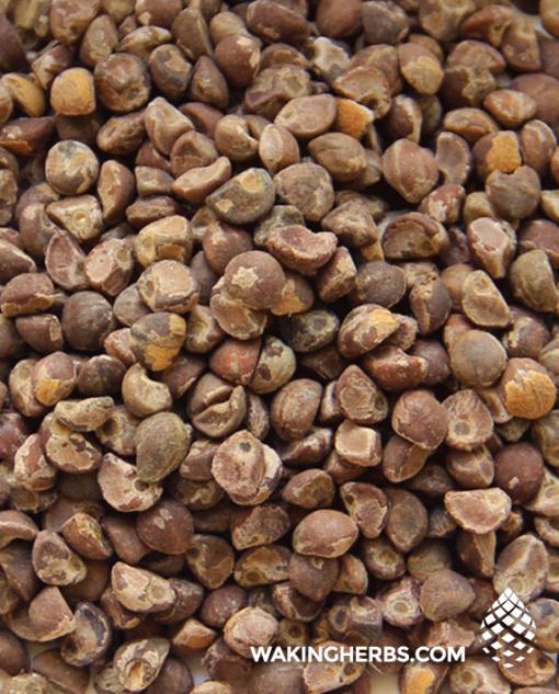 Argyreia nervosa (Hawaiian baby woodrose seeds
