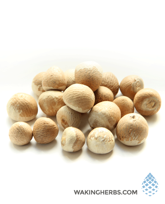 Areca catechu (Betel Nut Whole)
