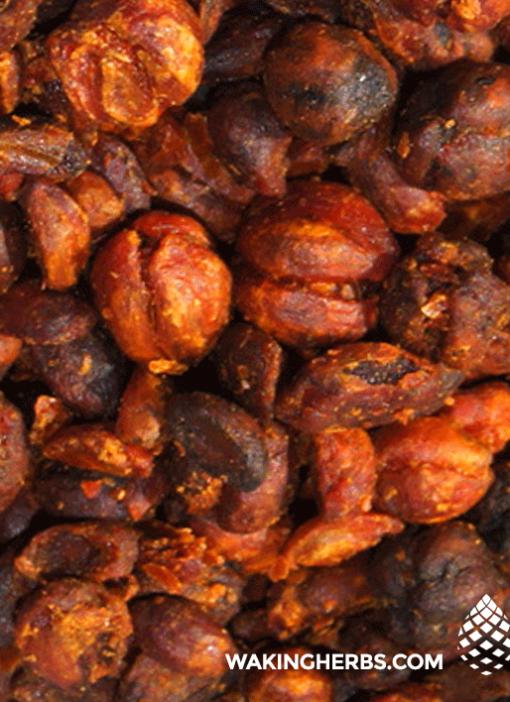 Celastrus-paniculatus-(Intellect-tree—brain-seeds)-Close-Up