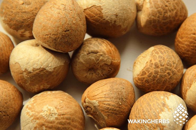Areca catechu (Betel Nut)