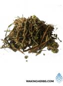 Heimia-salicifolia-(Sinicuichi)-2