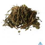 Heimia salicifolia | Sinicuichi | Dreamherbs