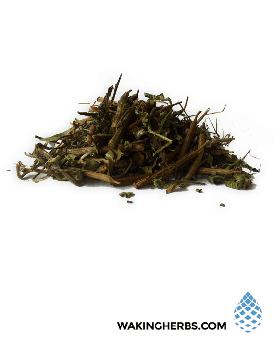 Heimia-salicifolia-(Sinicuichi)-3