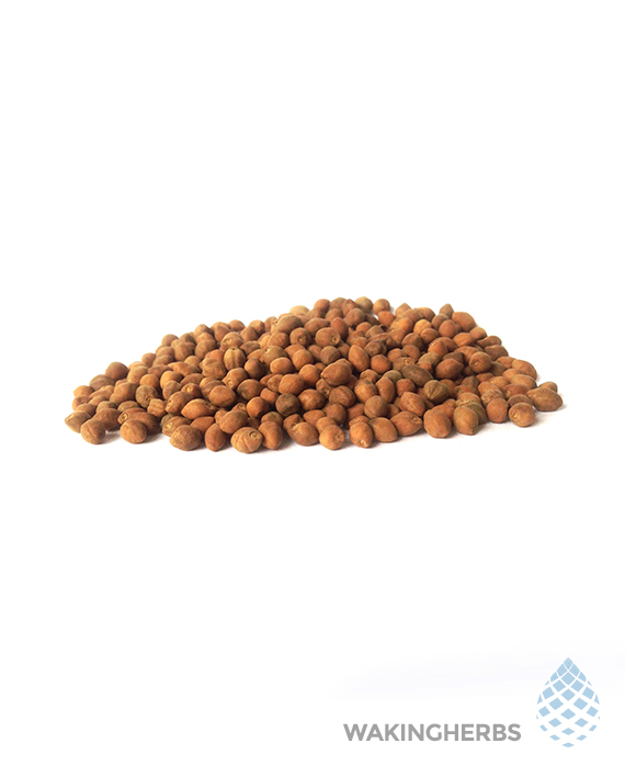 corymbosa seeds