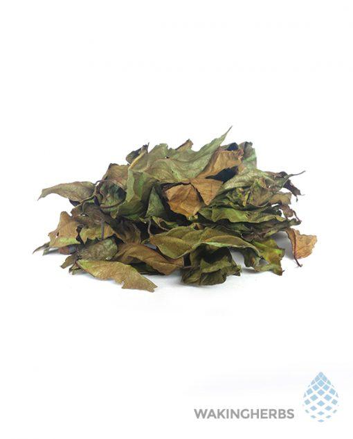 Banisteriopsis muricata | Red ayahuasca Vine| Red Caapi Yage | Shuar LEAVES