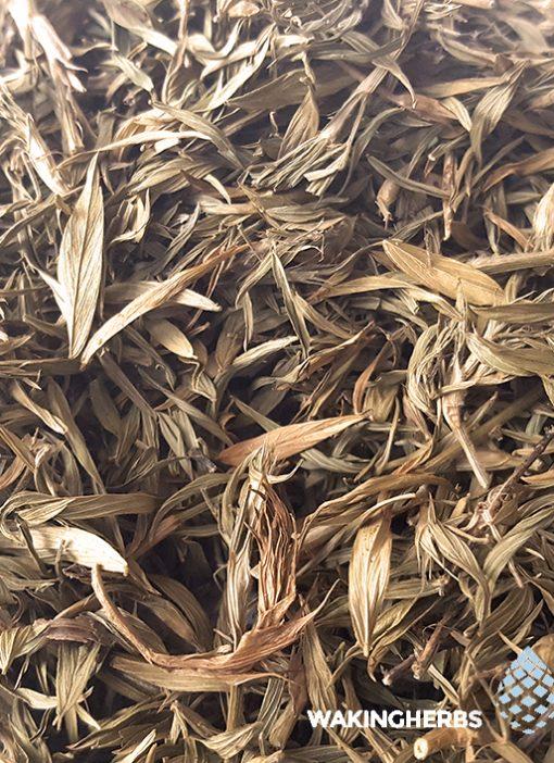 Zornia_latifolia_Leaf_3 570 x 708