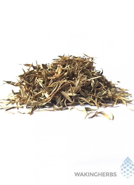 Zornia_latifolia_leaf_1 570 x 708
