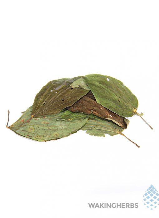 Bauhinia forticata_1