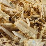 Mansoa alliacea | Ajo sacha | Wild garlic