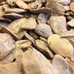 Picralima nitida Seeds (Akuamma Seeds)