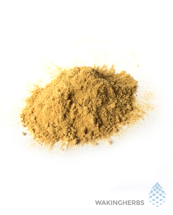 Sceletium tortuosum (50x High Mesembrine Extract Kanna)