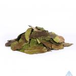 Guayusa_ilex_Guayusa_leaf_pile