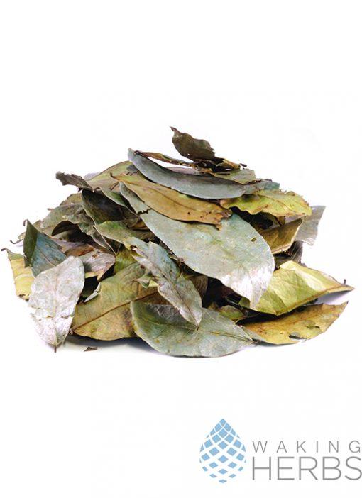 Annona muricata   guanábana   Graviola   Soursop