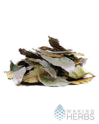 Annona muricata | guanábana | Graviola | Soursop