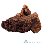 Inonotus obliquus Chaga