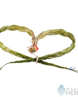 Hierochloe odorata | Wild Sweetgrass Braid | 60 / 70 cm