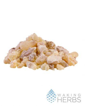 Frankincense | Boswellia caterii