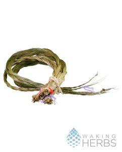 Hierochloe odorata Sweetgrass braid