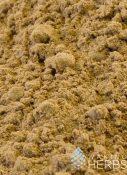 Ecuadorian Matico Rapé | Matico Cleanse | Yarumo (Cecropia peltata) & Matico (Piper aduncum) | #49