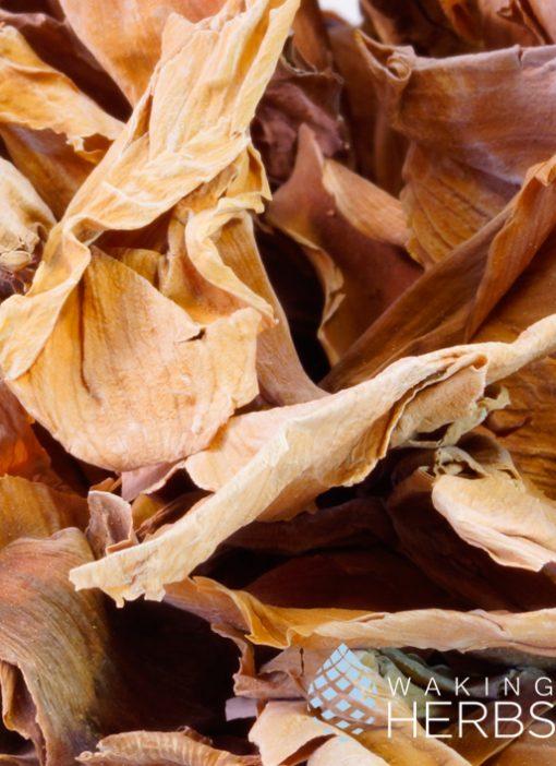 Nelumbo nucifera (Pink lotus), Sacred water lotus, East indian lotus, Sacred lotus, Indian lotus
