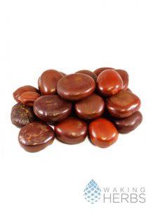 Entada-Rheedii-African-Dream-Beans
