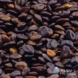 Mimosa hostilis seeds | MHRB Jurema