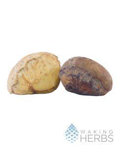 Camalonga Thevetia peruviana