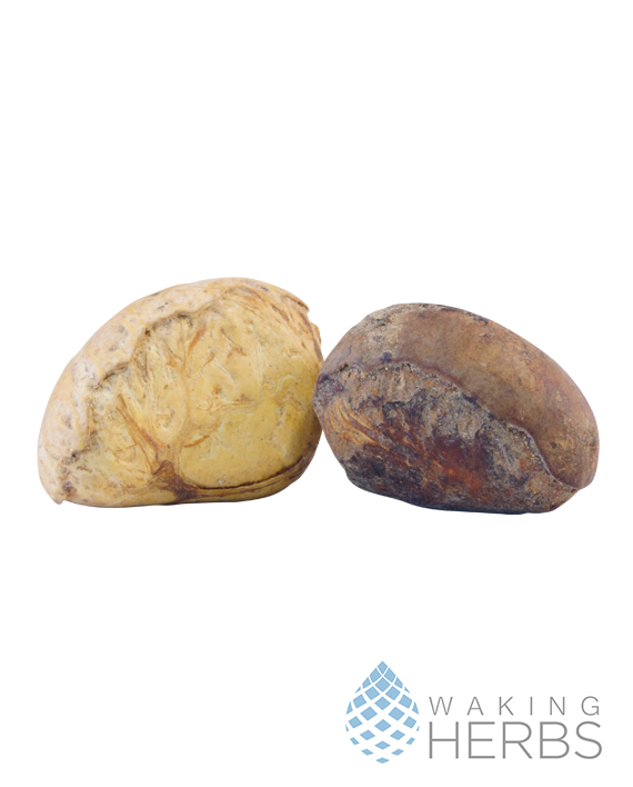 Camalonga Pair 570 x 708
