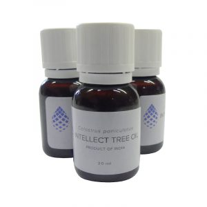 Celastrus paniculatus OIL | Intellect tree