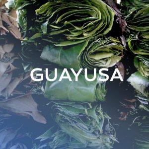 Guayusa ilex | Whole leaves